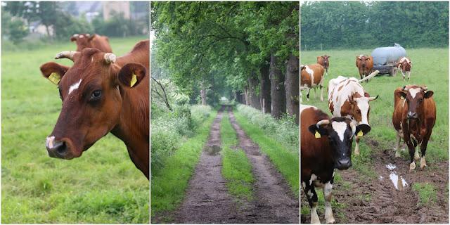 Milchkrise, konventionell, Bio-Milch, faire Preise, Milchbauer, ökodynamisch, Bio, Hofladen
