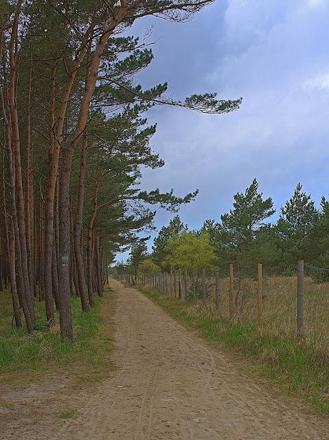spacer w okolicy plaży, wydmy wzdłuż lasu