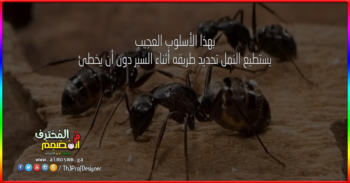 بهذا الأسلوب العجيب يستطيع النمل تحديد طريقه أثناء السير دون أن يخطئ