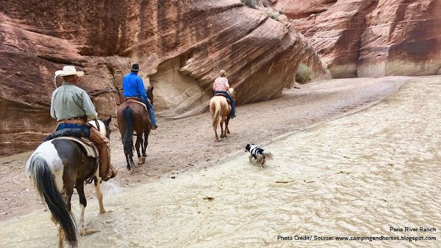a dog alongside horseback riders