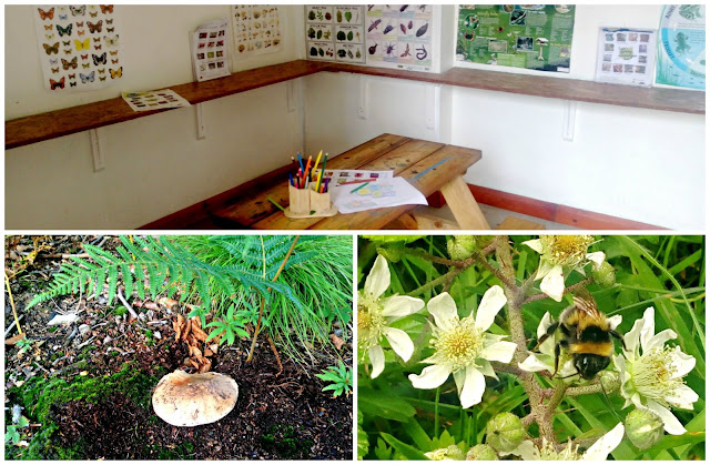 A collage featuring a mushroom, a bee, and the Wildlife Information Room