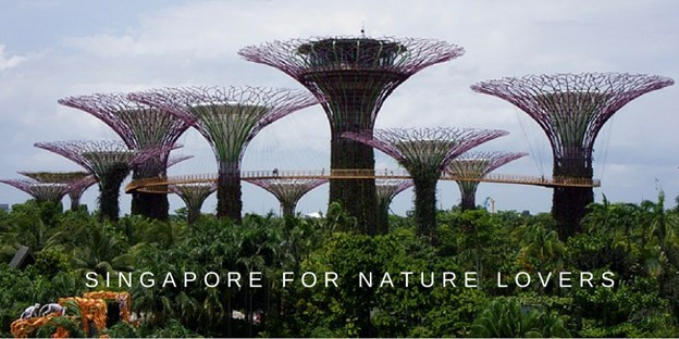 Gardens By The Bay, Botanic Garden, Singapore, Nature Lovers, Singapore Nature, Travel