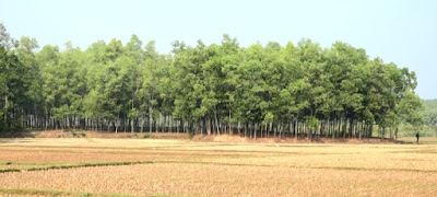 Comilla Jambari Forest is one of the tourist destinations for those who are thirsty for travel