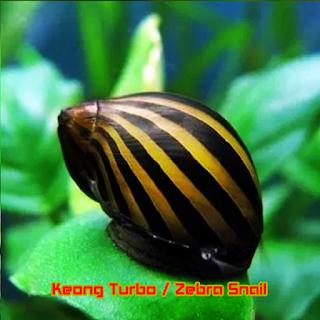 """Keong Hias Aquascape """"Keong Turbo"""""""