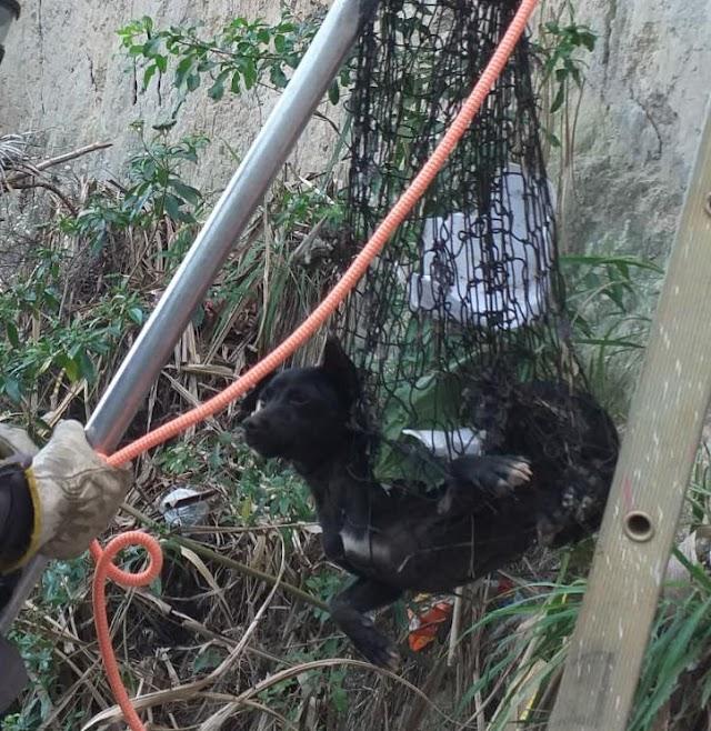 Bombeiros do 4°GBM resgatam cachorro em ribanceira