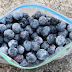 5 Surprising Reasons Why You Should Freeze Your Blueberries
