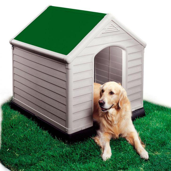 animal  Tipos de Casas para seu Cãozinho