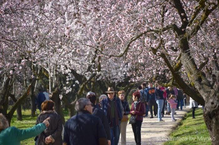 スペインのマドリードで市民がお花見を楽しんでいる風景