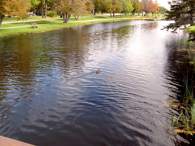 Small urban body of water with a duck in it