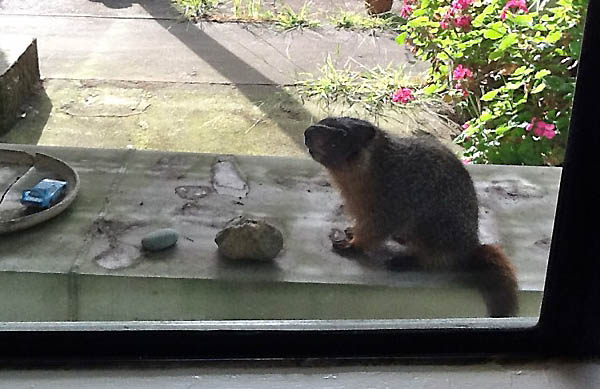 Wildlife Emergency Services blog: Marmot surfaces in San