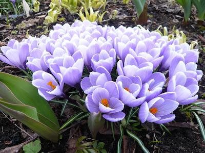 Работы в саду весной