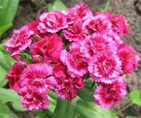 От цветов на которые смотрят к цветам которые едят, цветы, съедобные цветы, травы, съедобные травы, какие цветы можно есть, какие цветы нельзя есть, цветы в кулинарии, съедобный букет, какие цветы можно добавлять в еду, советы кулинарные, экзотическая кулинария, еда, кулинария, едят ли цветы, как есть цветы, рецепты из цветов, От цветов на которые смотрят к цветам которые едят, цветы, съедобные цветы, травы, съедобные травы, какие цветы можно есть, какие цветы нельзя есть, цветы в кулинарии, съедобный букет, какие цветы можно добавлять в еду, советы кулинарные, экзотическая кулинария, еда, кулинария, едят ли цветы, как есть цветы, рецепты из цветов, как добавлять цветы в еду, съедобные цветы, съедобные цветы в кулинарии, живые цветы в дизайне, съедобные цветы для женщин, съедобные комнатные растения, какие бывают цветы для кулинарии, цветы в кулинарии, цветы для украшения блюд, вкусные цветы, как сделать съедобный букет, настурция, съедобные букеты, какие цветы можно есть, какие цветы нельзя есть, пион, какие цветы пригодны в пищу, съедобные цветки в горшке, съедобные цветки растений, съедобные цветки кактуса, съедобные цветки лилии, съедобные цветки гибискуса, настурция цветки съедобные, какие цветы можно есть, какие части цветков можно есть, ядовитые цветки, как есть цветы, декор блюд съедобными цветами,как добавлять цветы в еду, съедобные цветы