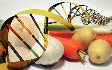 Os OGMs estão nos matando: fatos que ninguém esta falando