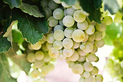 10 Benefits of Green Grapes - Are Green Grapes Good For You?
