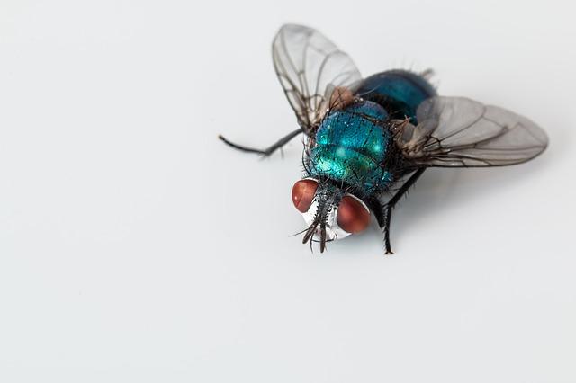 Cara Efektif Mengusir Lalat Dalam Rumah Secara Alami Yang Terbukti Ampuh