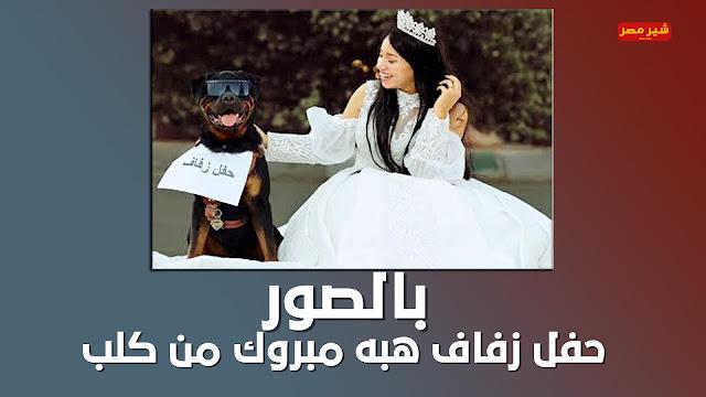 هبة مبروك تثير الجدل وتتزوج من كلب