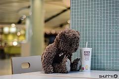 Oso marrón de peluche sentado, triste, sobre una mesa de cafetería.