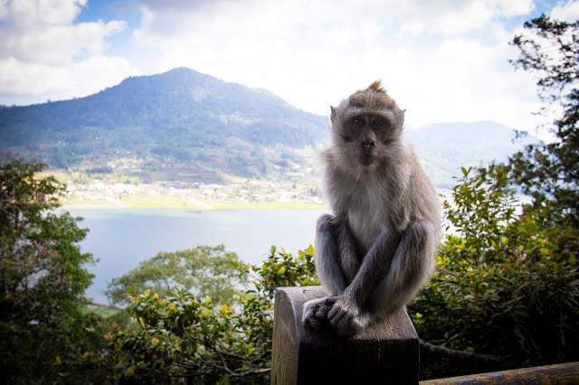 Laghi gemelli Danau Buyan e Tamblingan-Bali