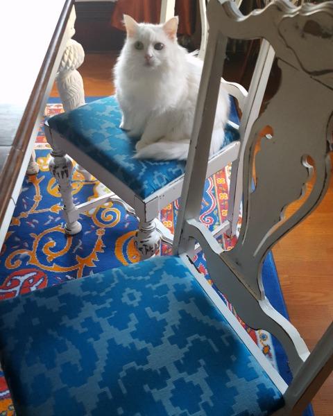 Farmhouse Chair Cushions