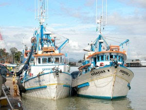 Resultado de imagem para Traineira pesca tainha