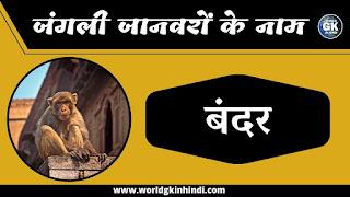 Monkey animal name in hindi | Wild Animals Name In Hindi