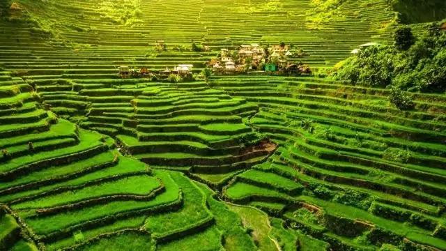 Batad Banaue Rice Terraces