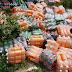 Carga com refrigerantes vencidos é descartada em bairro de Campo Formoso