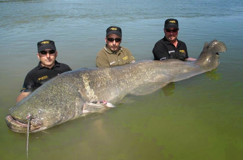 international fishing news 201405