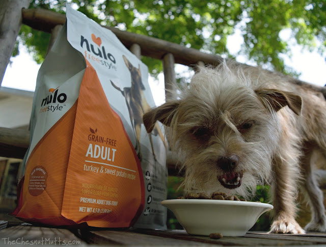 Mini Review: Nulo Freestyle Grain-Free Dog Food