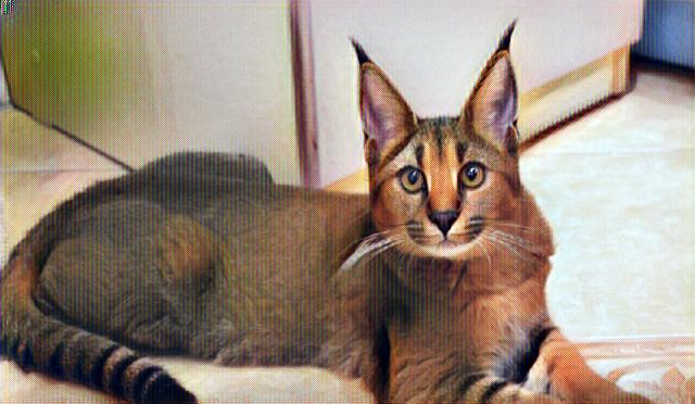 Gato híbrido Caracat en su hogar
