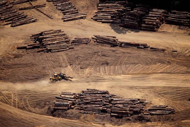 Những người thổ dân ở rừng Amazon đã chịu nhiều ảnh hưởng khi thế giới ngày càng phát triển. Họ phải đối mặt với nạn chặt phá rừng, thậm chí là bị giết bởi những tên lâm tặc. Thổ dân rừng Amazon vẫn thường tự tổ chức đi tuần, xua đuổi những người đào vàng trái phép khỏi mảnh đất của họ.