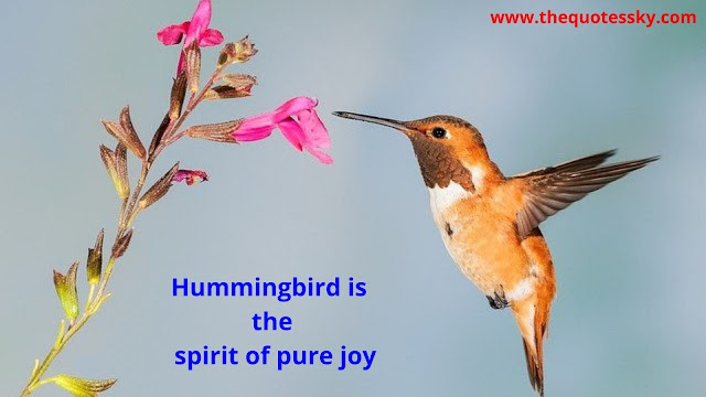 100+ Hummingbird Quotes And Sayings [ 2021 ]