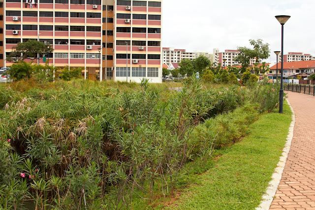 rain garden-giardino della pioggia-pioggia-giardino