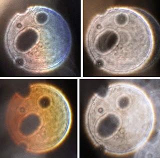 five-part orb pattern