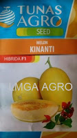 melon kinanti, melon kuning, budidaya melon, buah melon, manfaat melon, jual benih melon, toko pertanian, toko online, lmga agro