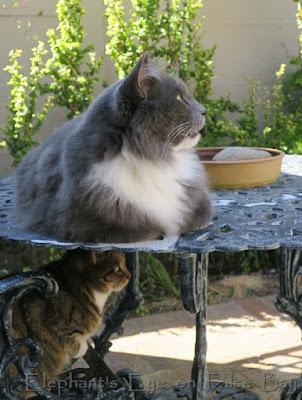 Cats on bird bath duty