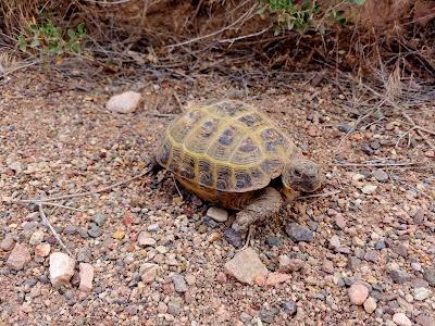 Fauna w  Charyn Canyon Kazachstan