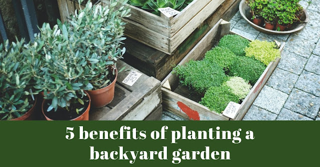 5 benefits of planting a backyard garden