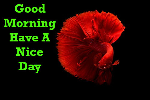 Latest Best Good Morning Wishes.