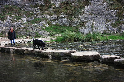 Photo of Liggy coming back over the stepping stones