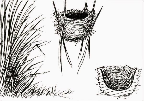 doradito nest