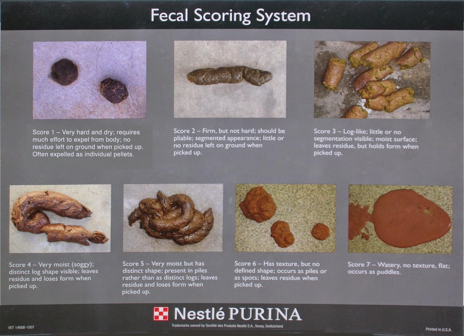 It may be yucky to look at but using this chart score your cat   stool can very helpful also exclusively cats veterinary hospital blog does canned food cause rh exclusivelycatsspot