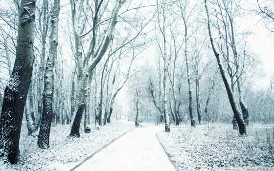 Najlepše zimske pozadine za računar - Snow