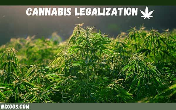 cannabis legalization environment