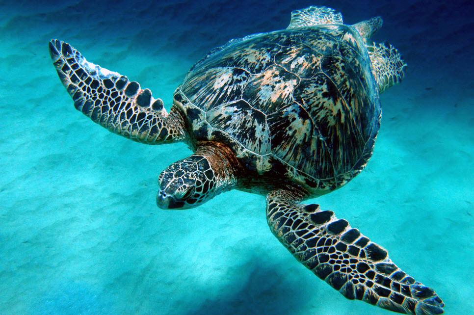 Green Sea Turtle Wild Life World