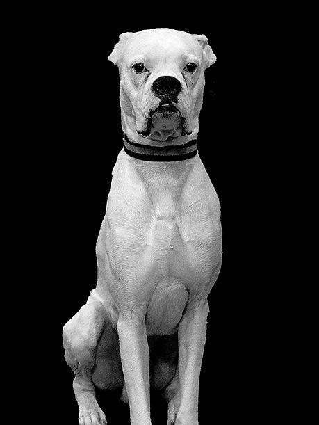 Perro blanco sobre fondo negro.