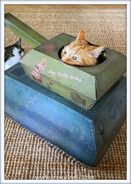 Tank Time with Fudge and Melvyn ©BionicBasil® The Sunday Selfies