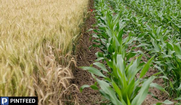 PintFeed | Organic Farming