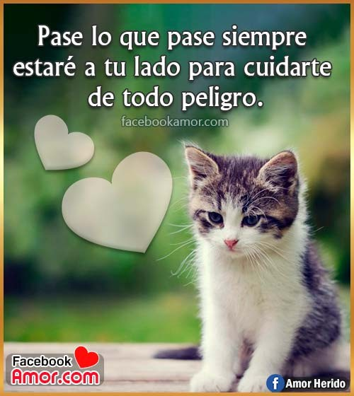 imágenes de gatos con frases de amor