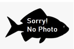 2006 Commonwealth Games fish of Victoria